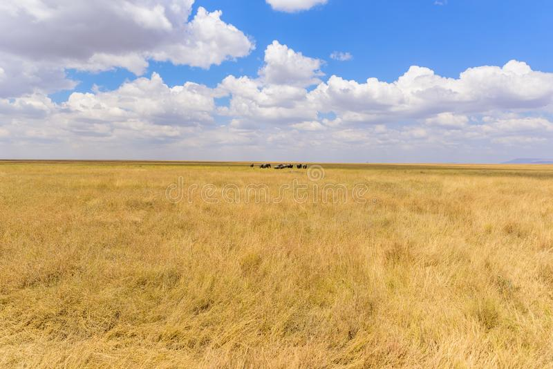 Afrikanischer Elefant-Herde in der Savanne von Serengeti bei Sonnenuntergang Akazienb?ume auf den Ebenen in Nationalpark Serenget stockfoto