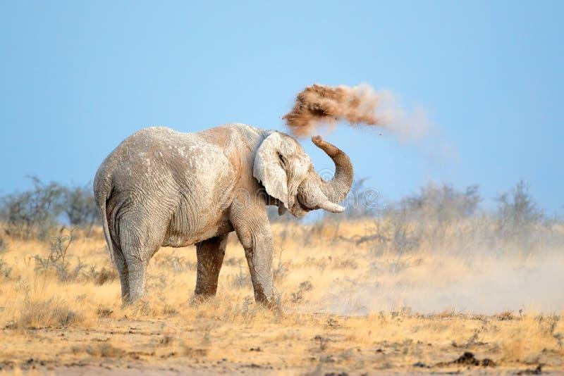 Afrikanischer Elefant im Staub stockfotos