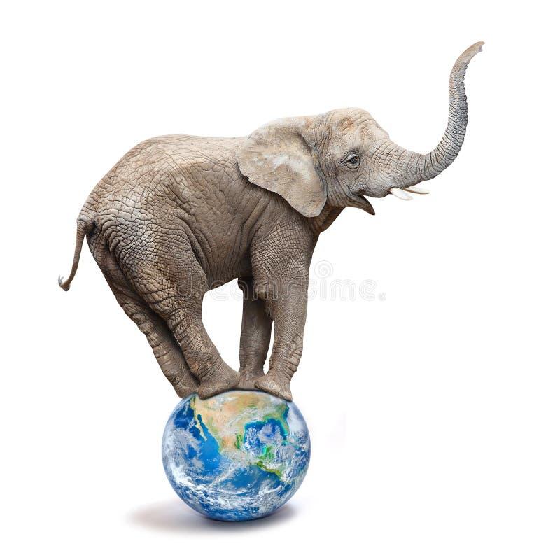 Afrikanischer Elefant - Loxodonta africana, das auf einem blauen Planeten oder einer Kugel balanciert stockbild