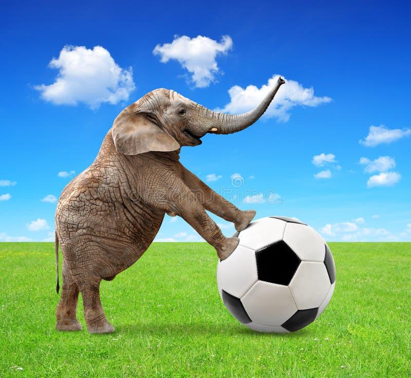 Afrikanischer Elefant mit Fußball stockfotos