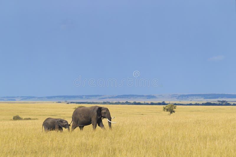 Afrikanischer Elefant mit Kalb lizenzfreies stockbild