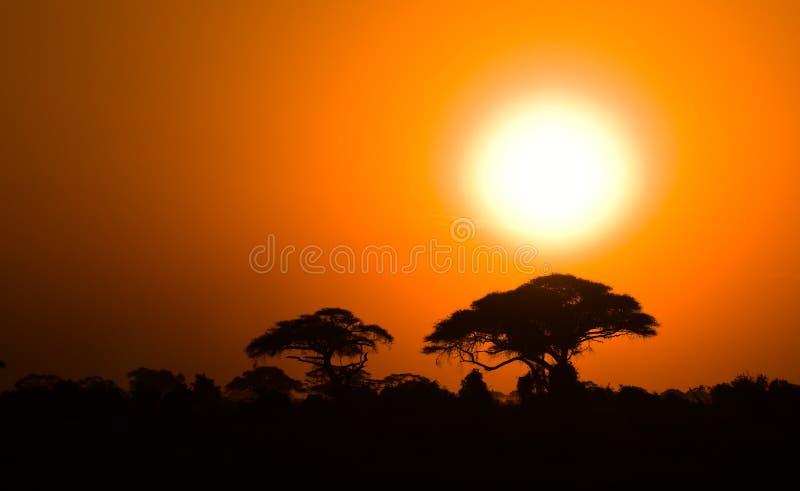 Afrikanischer Sonnenuntergang in der Savanne lizenzfreie stockfotografie