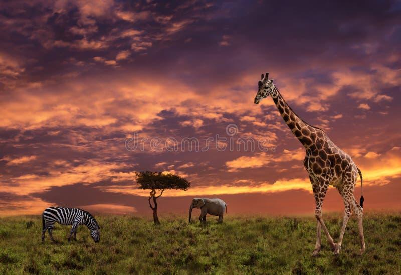 Afrikanischer Sonnenunterganghintergrund mit Tieren lizenzfreie stockbilder