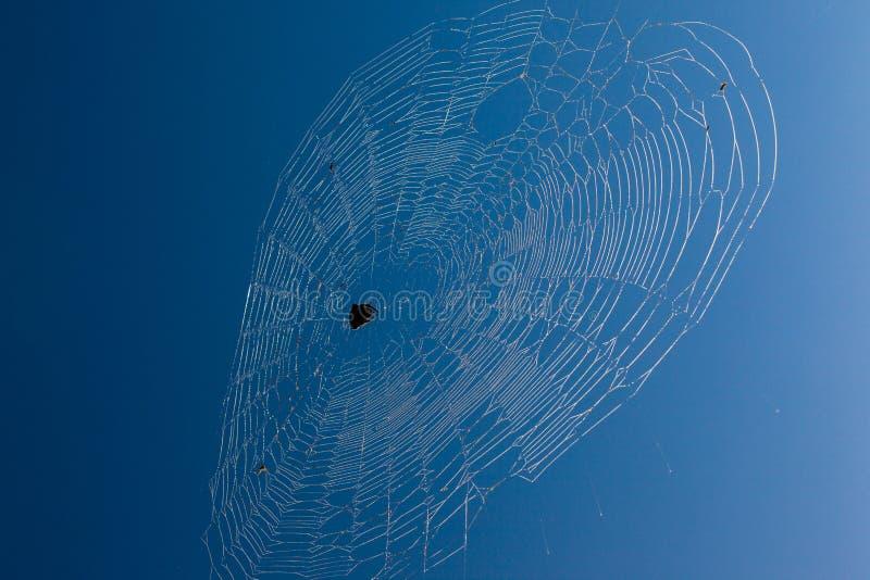 Download Afrikanischer Spinnen-Web-blauer Himmel Stockfoto - Bild von stark, parks: 26372026