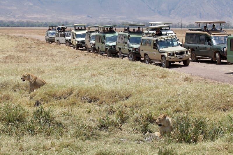 Afrikanischer Tourismus stockfotos
