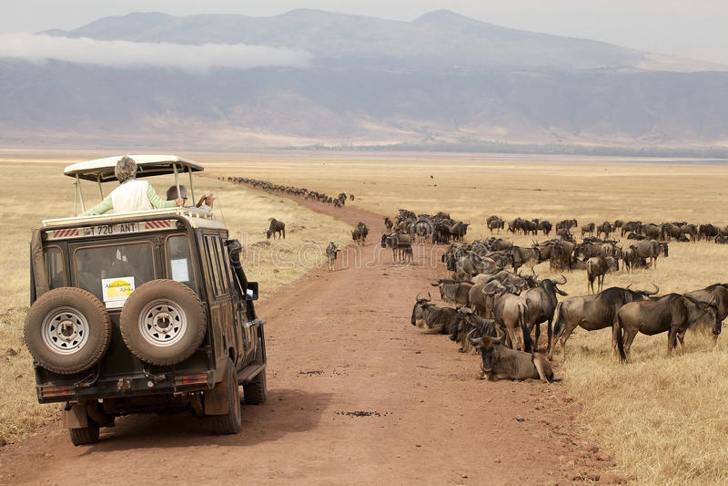 Afrikanischer Tourismus stockbild
