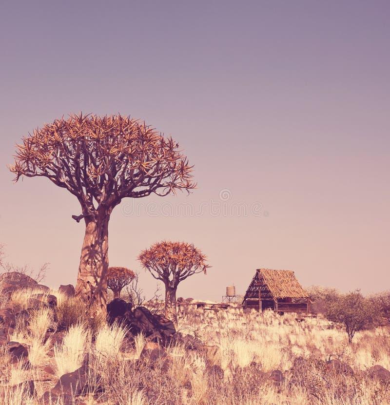 Afrikanischer Weihnachtsbaum stockfotos