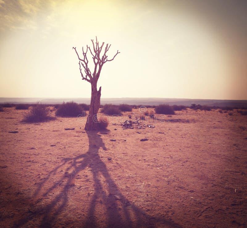 Afrikanischer Weihnachtsbaum stockfoto