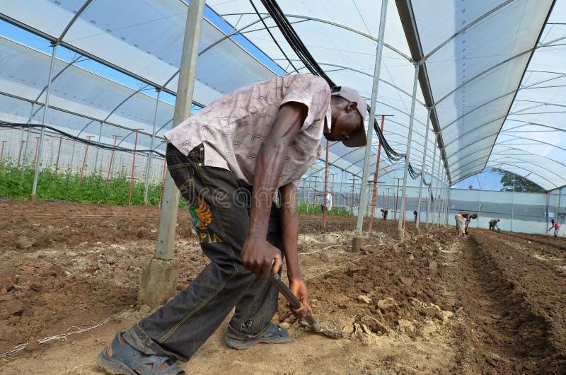 afrikansk bonde royaltyfria foton