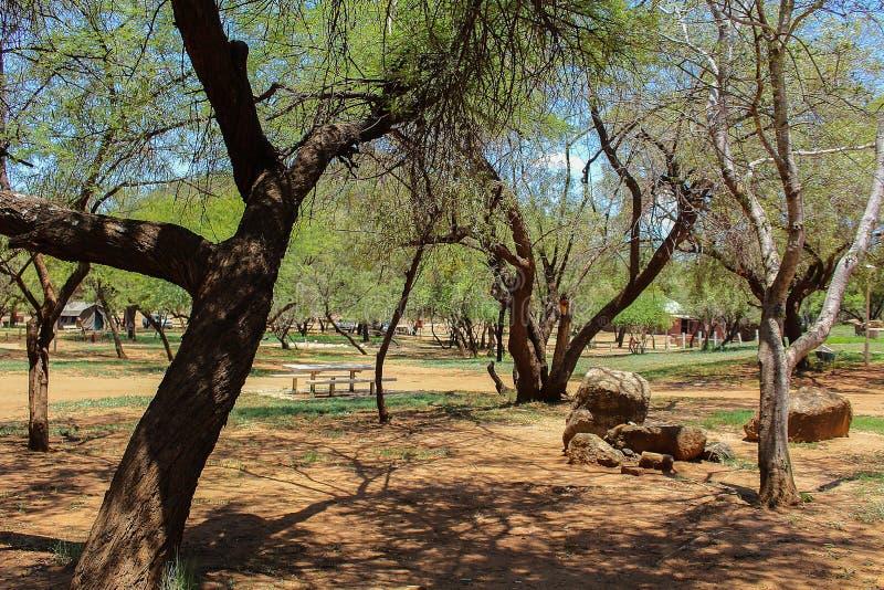 Afrikansk campa plats med träd, tabeller och bänkar royaltyfria bilder
