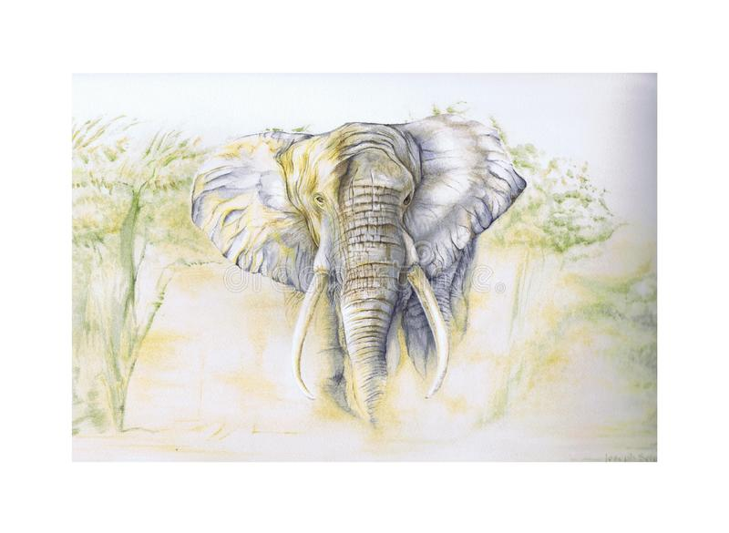 afrikansk elefant royaltyfria bilder