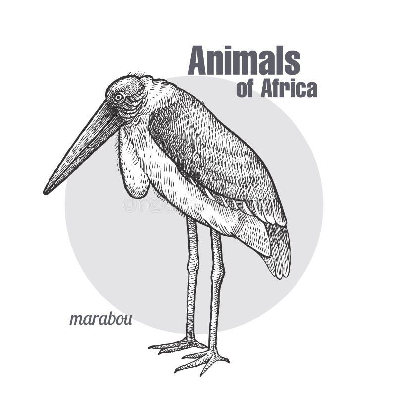 Afrikansk fågelmarabu vektor illustrationer