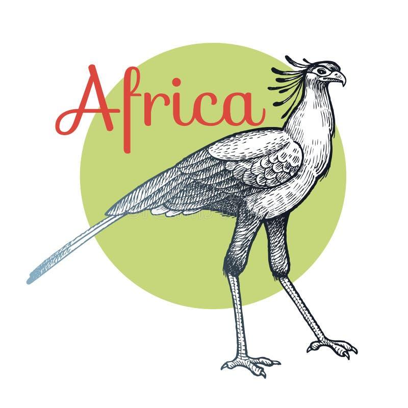 afrikansk fågelsekreterare royaltyfri illustrationer