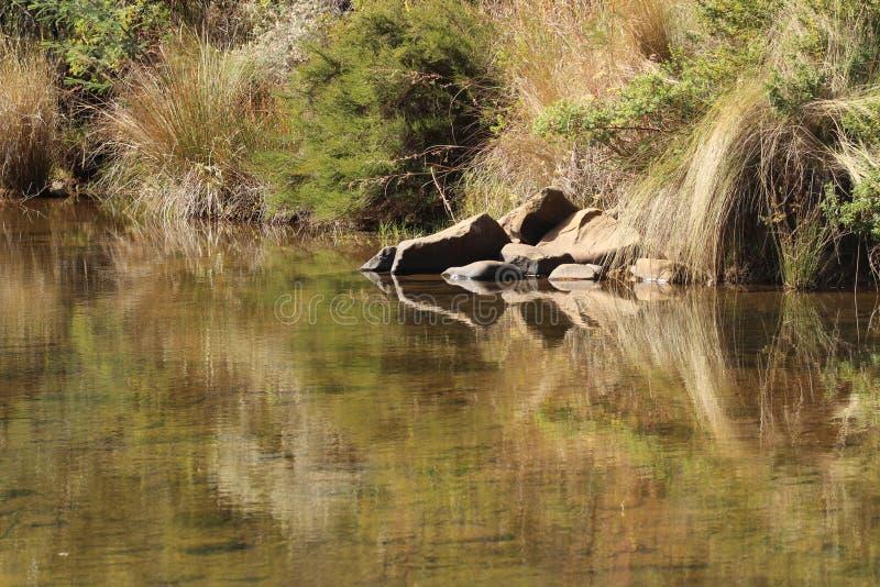 Afrikansk flodstilleben arkivbild