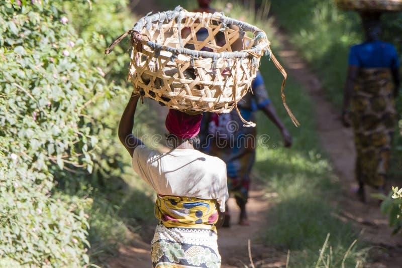 Afrikansk kvinna med korgen på huvudet som går på en lantlig väg arkivfoton