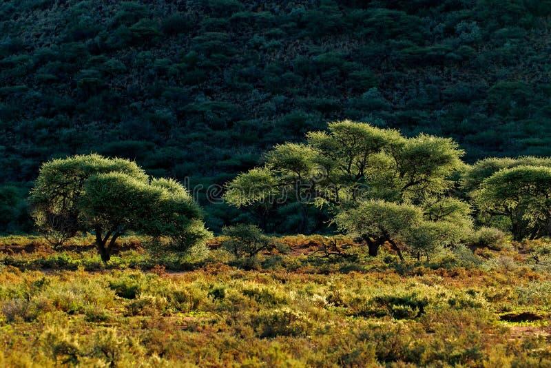 afrikansk liggande arkivbild