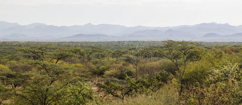 afrikansk liggande Mago National Park ethiopia royaltyfria foton