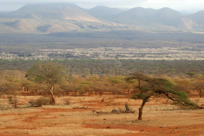 afrikansk savanna royaltyfri bild