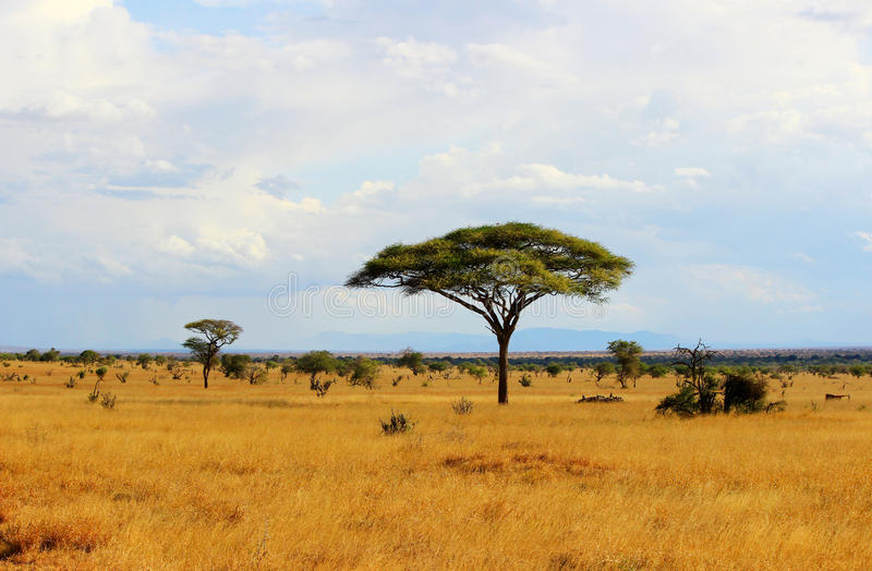Afrikansk savannah royaltyfria bilder