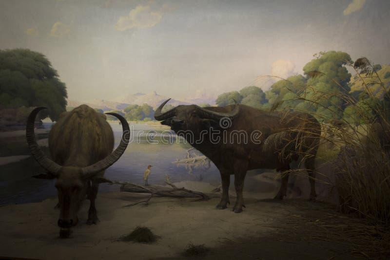 Afrikansk skog och djur royaltyfria foton