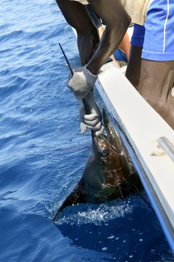 afrikansk sport för sailfish för man för fartygfiskeholding royaltyfri fotografi