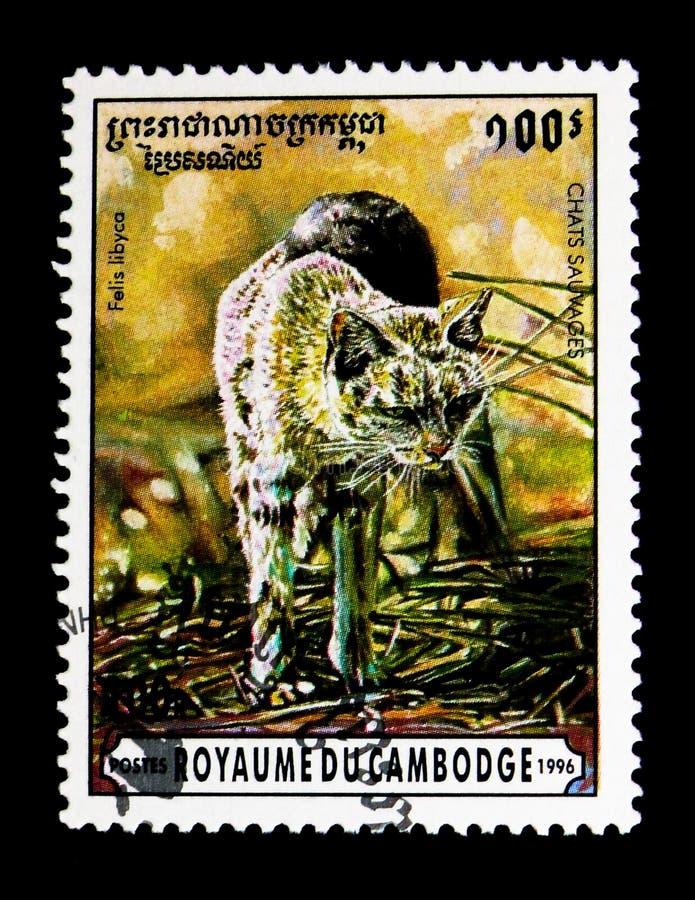 Afrikansk svindel- Felissilvestrislybica, lös kattserie, circa 1996 arkivbild