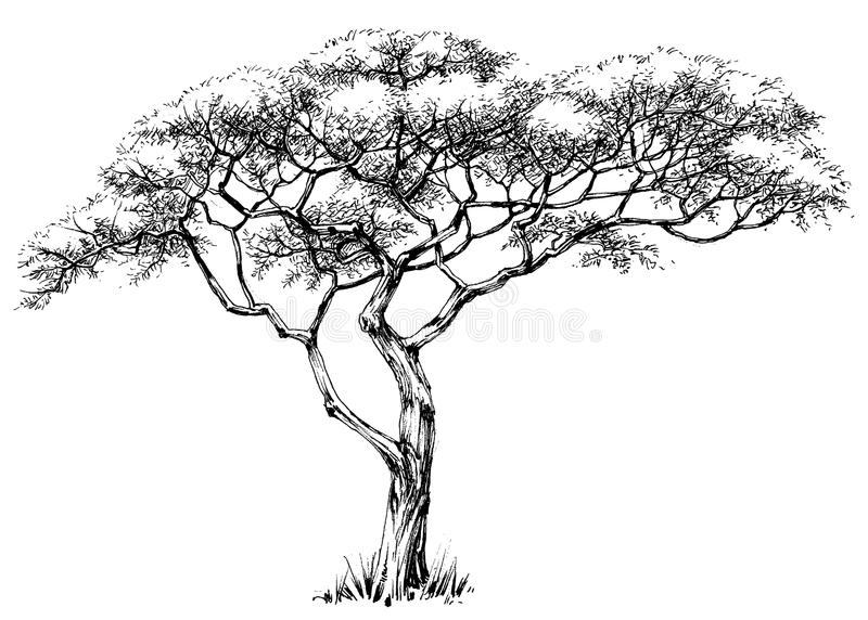afrikansk tree vektor illustrationer
