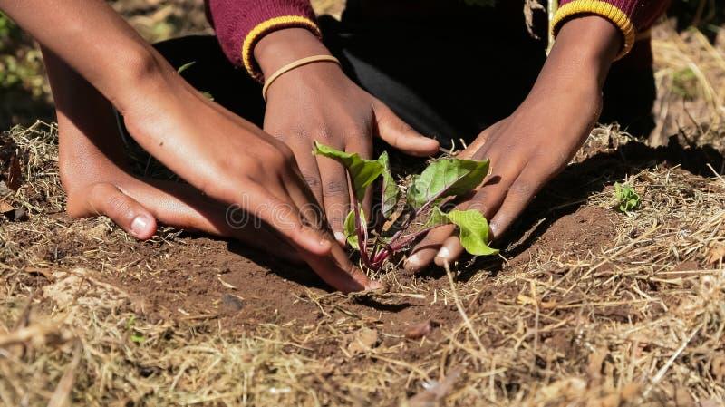 Afrikanska barnhänder som planterar grönsaker i jord royaltyfri bild