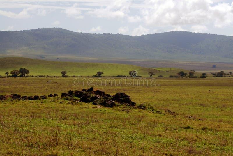 Afrikanska slättar arkivbild