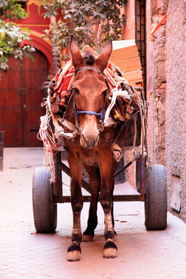 Afrique - Maroc - Marrakech images libres de droits