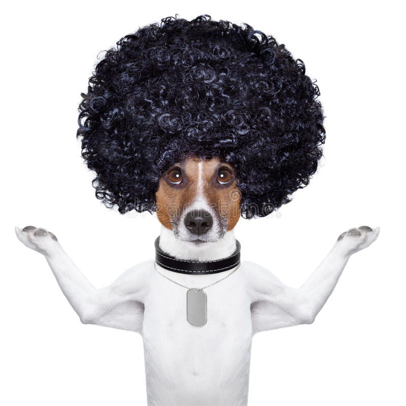Afro dog royalty free stock photography