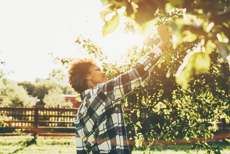 Afromeisje het plukken appel van een boom royalty-vrije stock foto