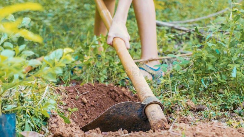 Afrouxe o solo seco com uma enxada Solo de trabalho com enxada, close-up fotografia de stock
