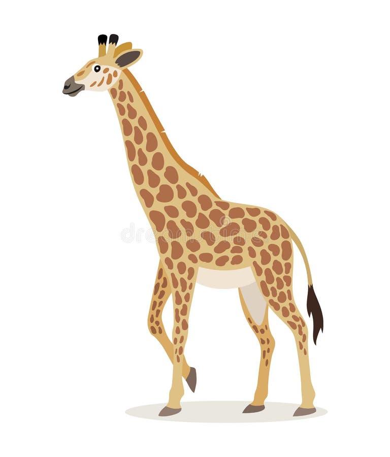 Afrykański zwierzę, śliczna żyrafy ikona odizolowywająca na białym tle, zwierzę z długą szyją, wektor ilustracji