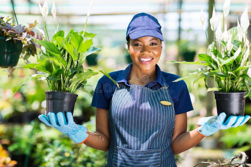 Afrykańscy kwiaciarnia kwiaty obraz royalty free