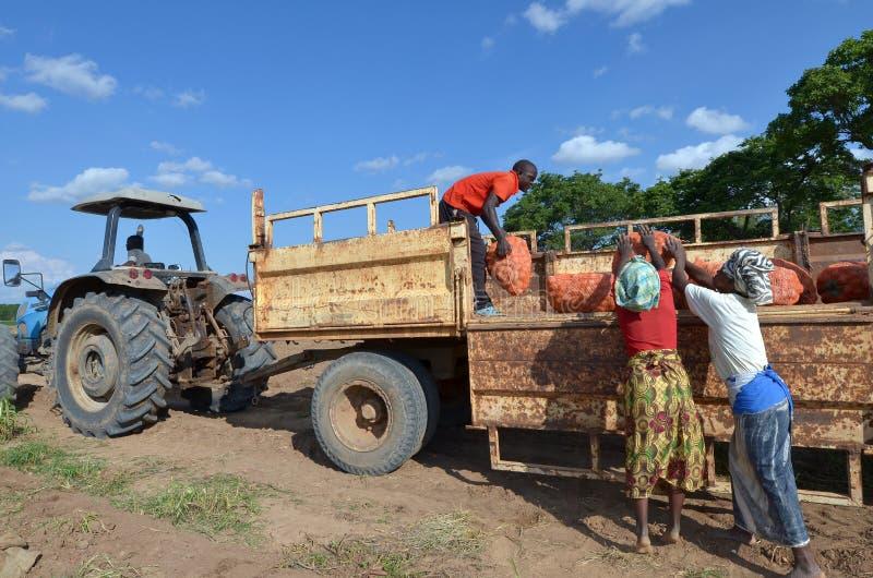 afrykańscy rolnicy zdjęcia stock