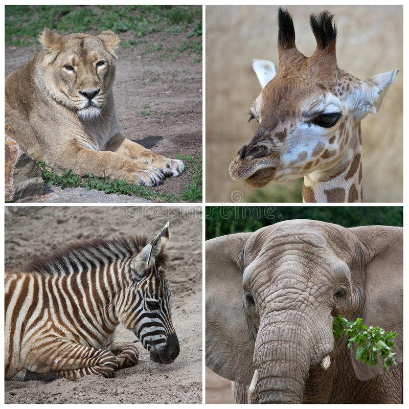 afrykańscy zwierzęta obraz royalty free