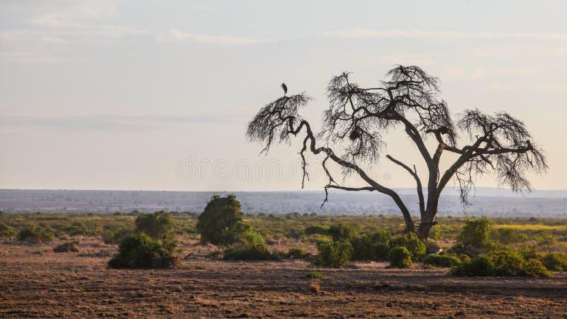 Afrykańska sawanna, mieszkanie ziemia z sylwetką jeden suchy drzewo, bohater zdjęcia royalty free