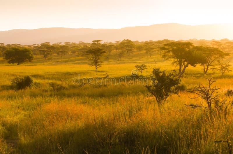 Afrykańska sawanna w mglistym ranku świetle fotografia royalty free