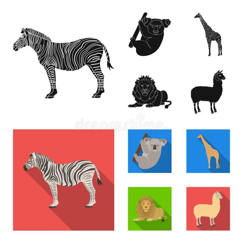 Afrykańska zebra, zwierzęca koala, żyrafa, dziki drapieżnik, lew Dzikie zwierzę ustawiać inkasowe ikony w czarnym, mieszkanie sty ilustracja wektor