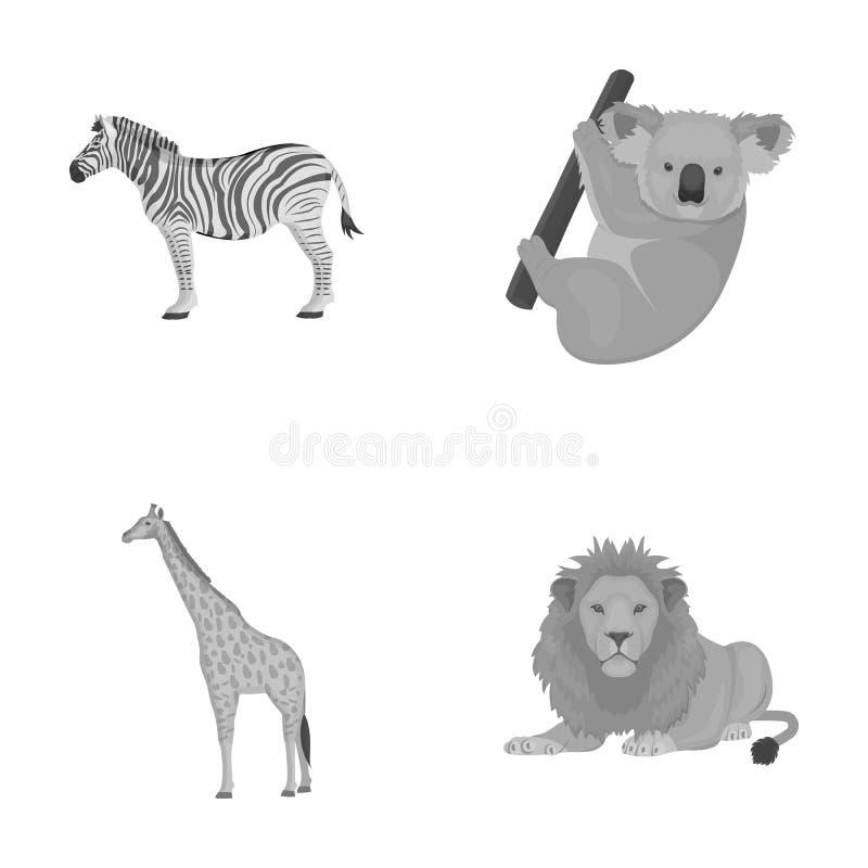Afrykańska zebra, zwierzęca koala, żyrafa, dziki drapieżnik, lew Dzikie zwierzę ustawiać inkasowe ikony w monochromu projektują w royalty ilustracja