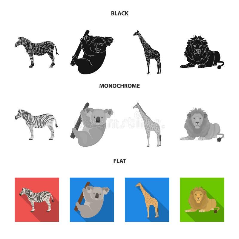 Afrykańska zebra, zwierzęca koala, żyrafa, dziki drapieżnik, lew Dzikie zwierzęta ustawiają inkasowe ikony w czarnym, płaski, mon ilustracji