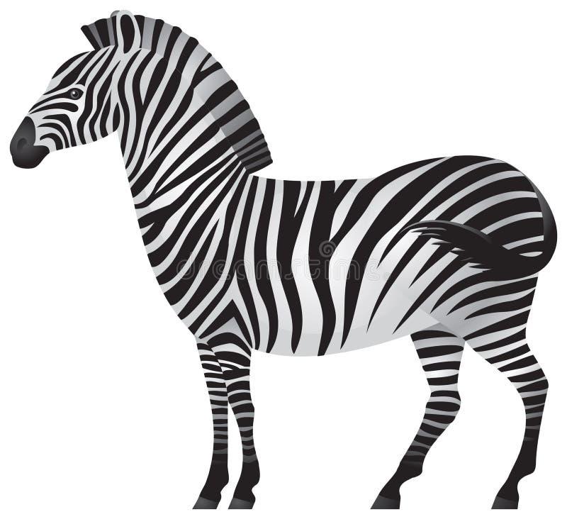 afrykańska zwierzęca zebra