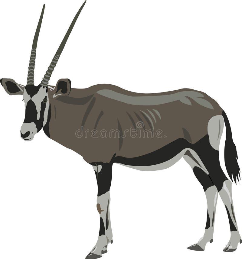 afrykański oryx