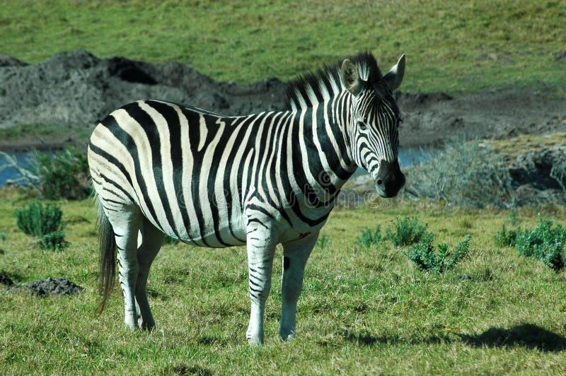 afrykański przyrody zdjęcia royalty free