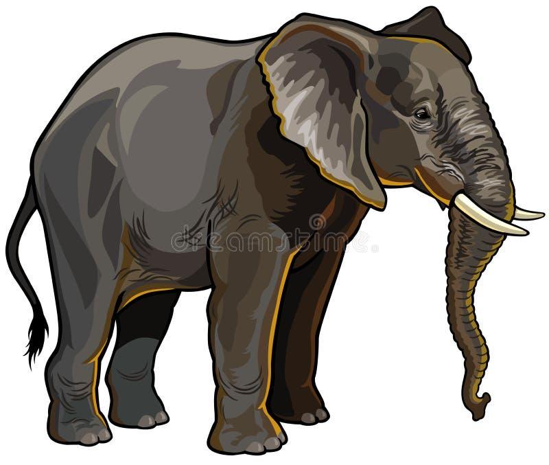 Afrykański słoń ilustracja wektor