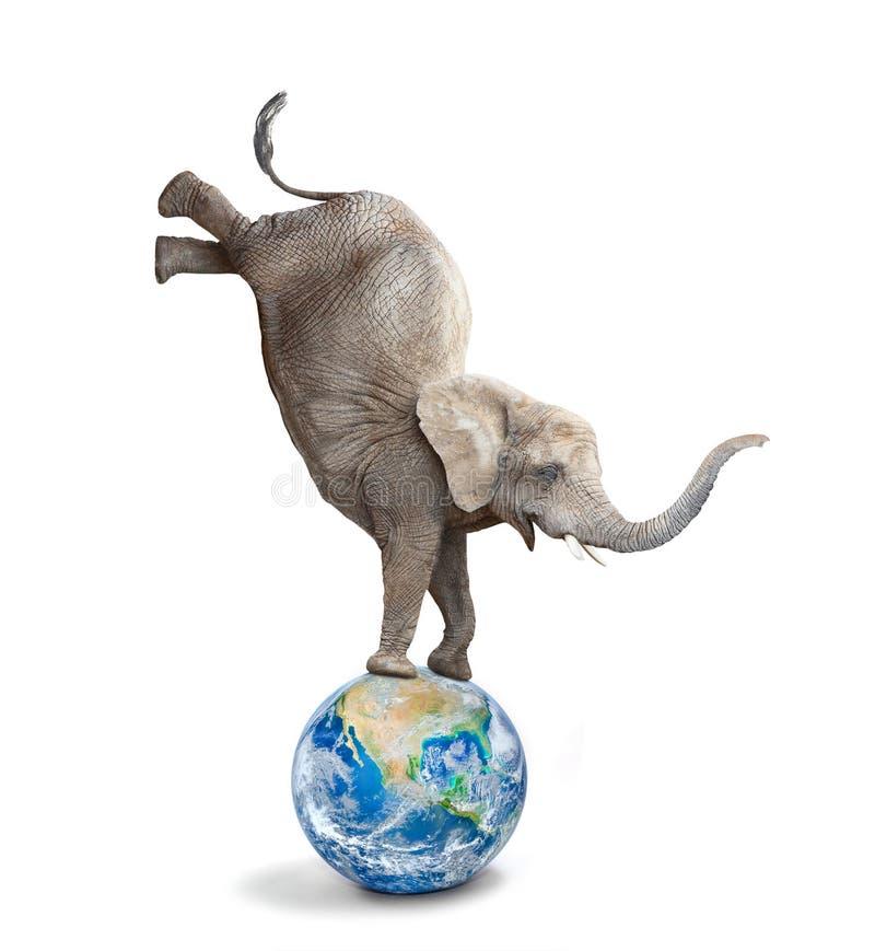 Afrykański słoń - Loxodonta africana równoważenie na błękitnej kuli ziemskiej lub planecie obraz stock