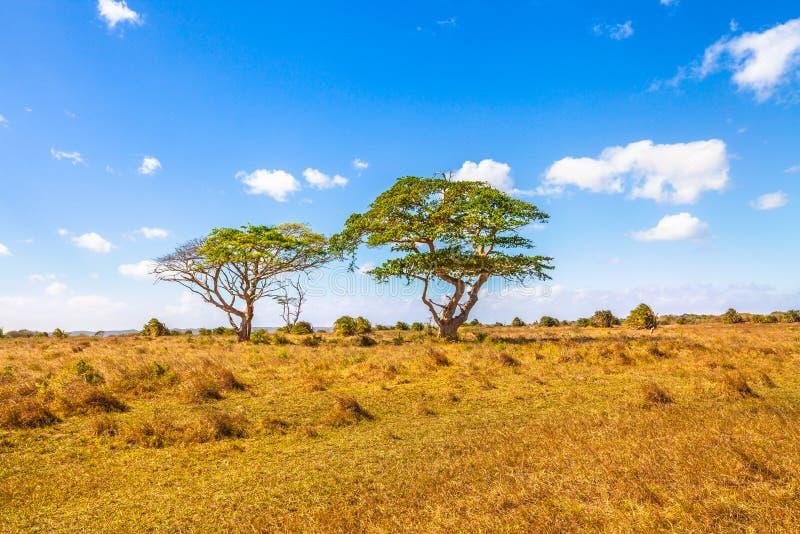 Afrykański sawanna krajobraz fotografia stock