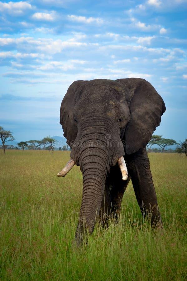 Afrykański sawanna krajobraz, Tanzania Afryka fotografia royalty free