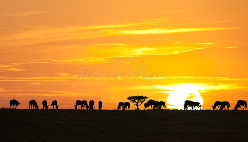afrykański wschód słońca obraz stock
